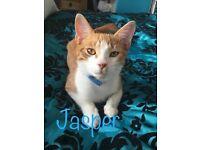 Kitten where is jasper