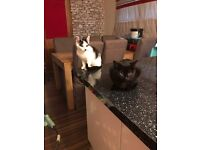 2 Beautiful kittens ready for homes