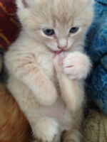 4 EXTREMELY CUTE KITTENS FREE TO GOOD HOME -- SEE PHOTOS