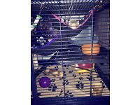 Rat & Ferret Cage
