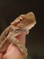 Pet Sitting - Reptiles/Birds/Small Animals!