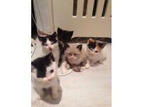 5 gorgeous kittens looking for thier forever home!