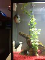 38 gal tank with jaguare chiclid and synda catfish