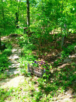SMRT - Interested in off grid living? This property is ideal!