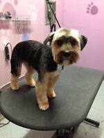 Dog and Cat Grooming available mon to sat