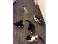 Cute kittens !