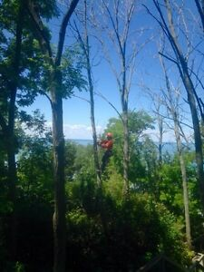 Affordable Tree Trimming and Removal London Ontario image 1