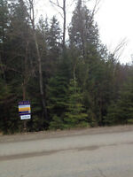 60 Acres of Wooded Vacant Land