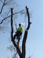 Tree Removal, Stump Removal Services