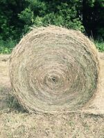 Round bales- hay for sale