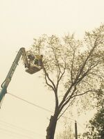 *****Tree Removal and Pruning*****