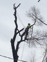 Tree Removal / Landscaping - spring special
