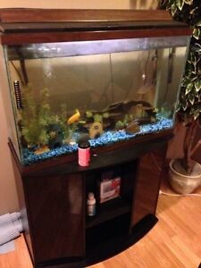 40 Gallon fish tank with stand