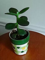 For sale - very cute jade plant in ceramic pot