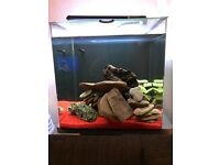 60L aquarium