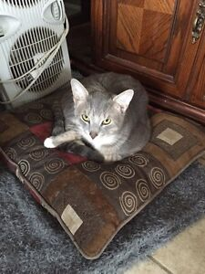 Friendly cat needs forever home London Ontario image 5