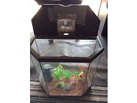 2 half hexagon fish tanks
