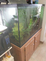 110 gallon tall discus aquarium and stand and 65 gallon aquarium