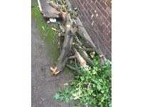 Free fire wood and branches