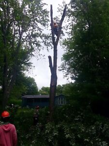 Affordable Tree Trimming and Removal London Ontario image 7