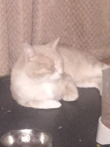 Male cat for free