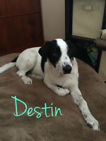 Destin is looking for his forever home!  LIFERAFT