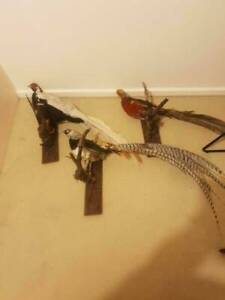 Taxidermy pheasants Adelaide CBD Adelaide City Preview