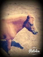 Horse and ponies for sale