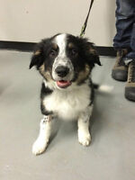 Calling All New Puppy Parents! - Puppy Classes