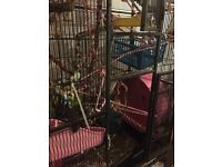 Animal/Bird Cage