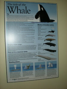 THE TALE OF THE WHALE WALL PLAQUE