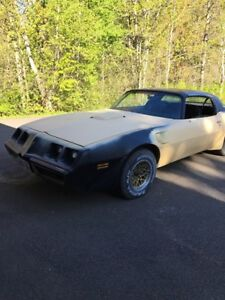 1979 TRANS AM SPECIAL EDITION