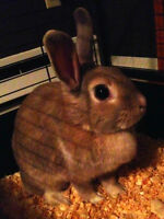 Rabbit Looking For A New Home !