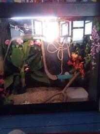 2 year old female iguana with full set up