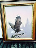 Beautiful picture of eagle