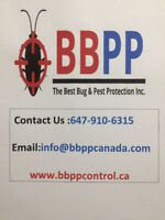 Pest Control Services in Brampton at Lowest Price