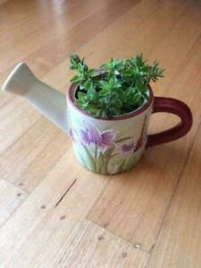 Ornamental pot with herbs