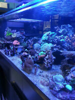 reef tank,dry live rock,saltwater aquascape,Fiji,Tonga,Pukani...