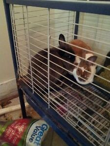 two female bunnies and cage and food