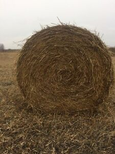 Good quality millet round bales for sale