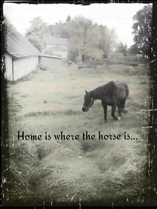 Seeking Rental Property Suitable for 2 horses & our family