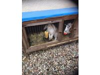 Lovely 16 week old female rabbit and items