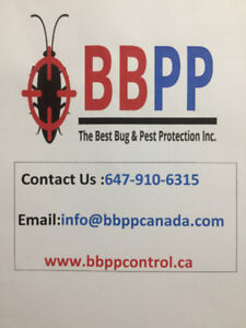Pest Control Services in Markham/York Region at Lowest Price