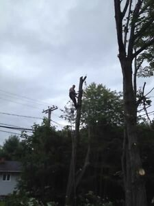Tree services  London Ontario image 8