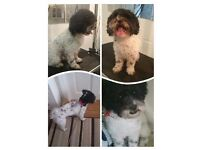 Dog Grooming Professionally At Home .. From Grooming Room