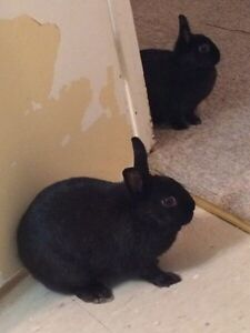 Mommy and daughter bunny