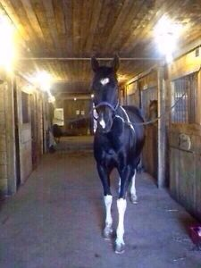 Need gone! Great project horse!!