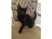 Kittens forsale 10 weeks old ready now