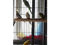 Aviary clearance