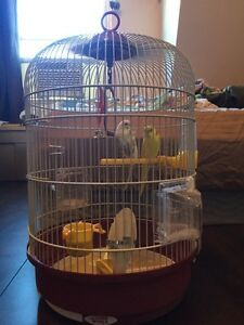 2 budgies + hanging cage